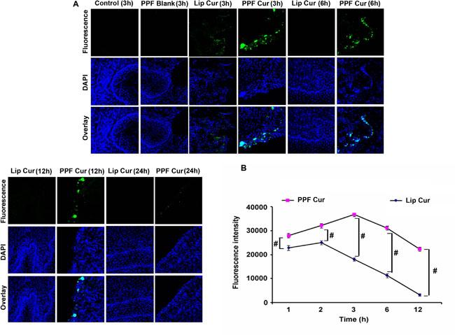 PPF-curcumin exhibits enhanced bioavailability and tissue retention of curcumin.