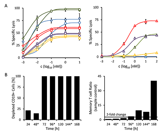 Redirected lysis of CD19-positive malignant cells from primary patient material mediated by triplebody 19-3-19.