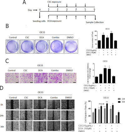 Bile acid and cigarette smoke enhance the aggressive phenotype of esophageal adenocarcinoma cells.