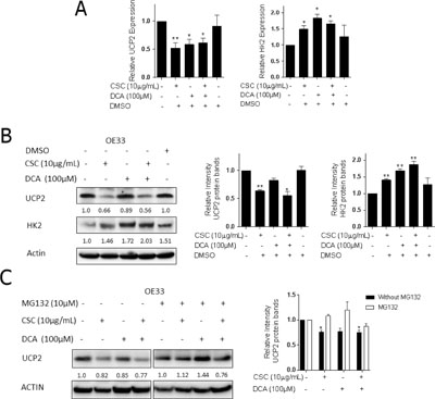 Bile acid and cigarette smoke condensate inhibit UCP2 expression and increase HK2 expression.