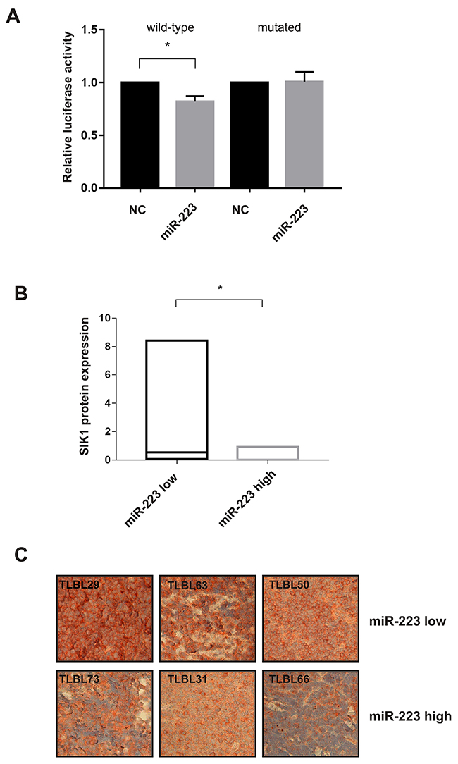 miR-223 modulates the expression of SIK1.