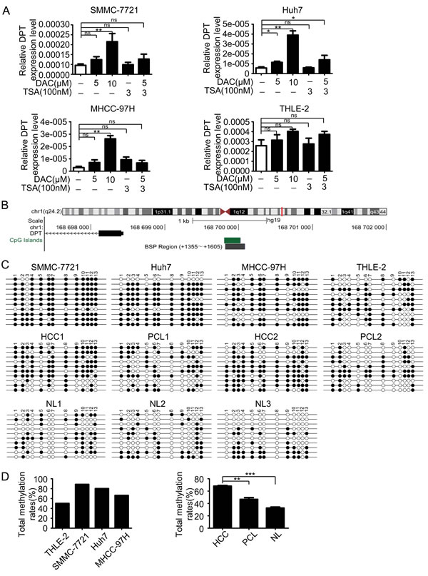 DPT is down-regulated by hypermethylation of DNA promoter.