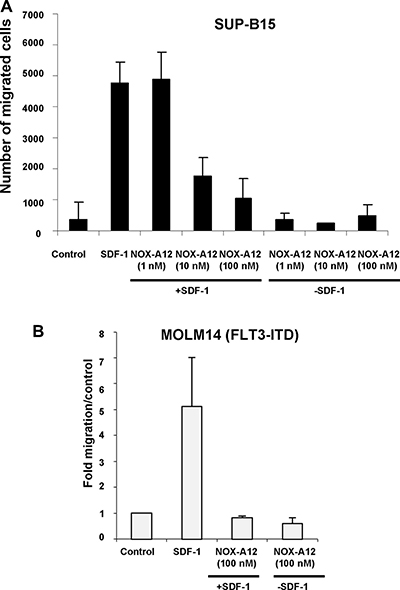 NOX-A12 inhibition of SDF-1-induced migration of BCR-ABL-expressing human SUP-B15 cells and FLT3-ITD-positive human MOLM14 cells.