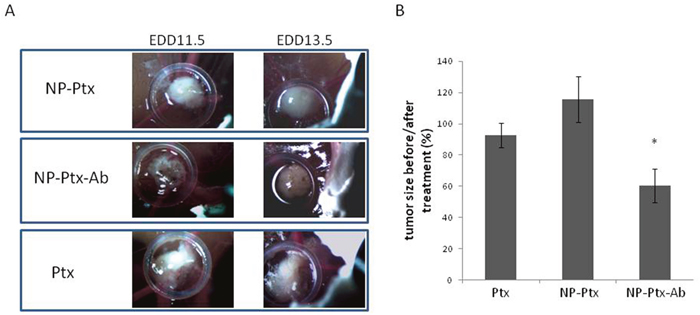 Effects of Ptx, NP-Ptx and NP-Ptx-Ab on tumor development.