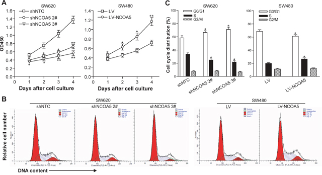 NCOA5 promotes CRC cell proliferation and G1 to S phase transition.