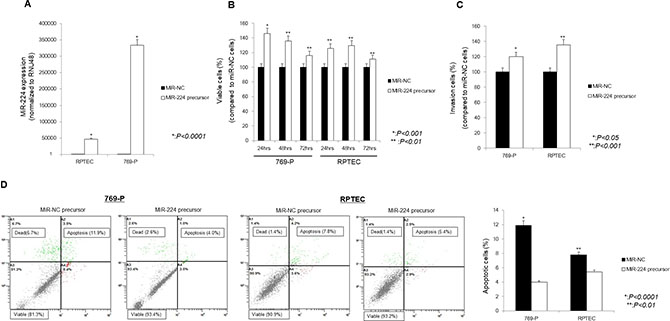 Effect of miR-224 upregulation on 769-P cells and RPTEC cells.
