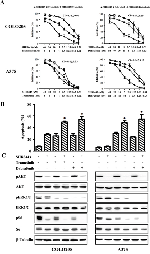 Combined treatment of BRAF mutant A375 and COLO205 cells with SHR8443 and dabrafenib or trametinib.