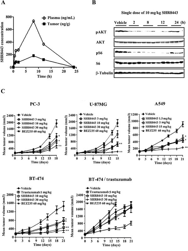 In vivo study of SHR8443 in mouse xenograft models.