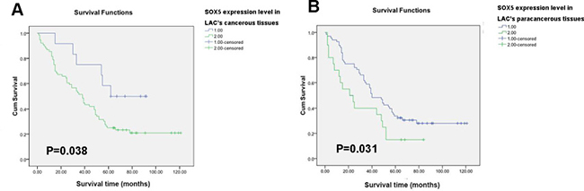 SOX5 (in both tumor and paracancerous tissues) correlates negatively with survival in LAC patients.