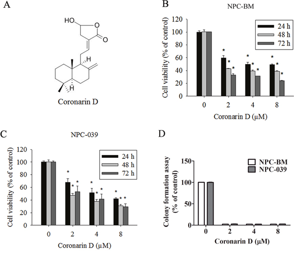 The dose- and time-dependent effects of Coronarin D (CD) on cell viability in human nasopharyngeal carcinoma (NPC) cells.