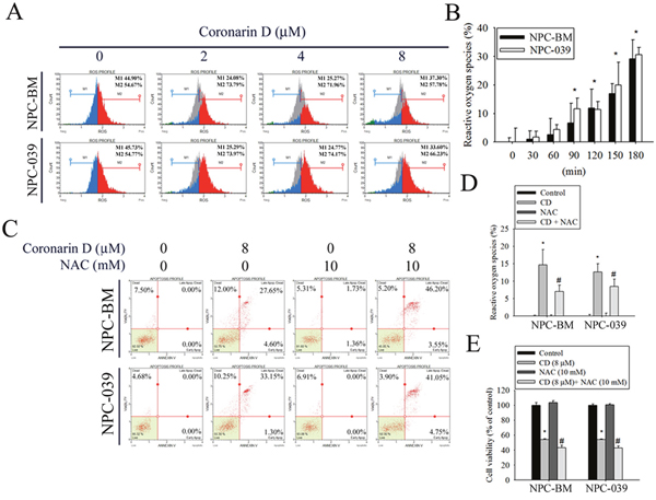 CD increases the generation of intracellular reactive oxygen species (ROS) to modulate cell death in NPC-BM and NPC-039 cells.