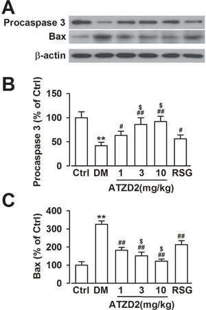 Effects of ATZD2 on the apoptosis in the hippocampus of diabetic rats.