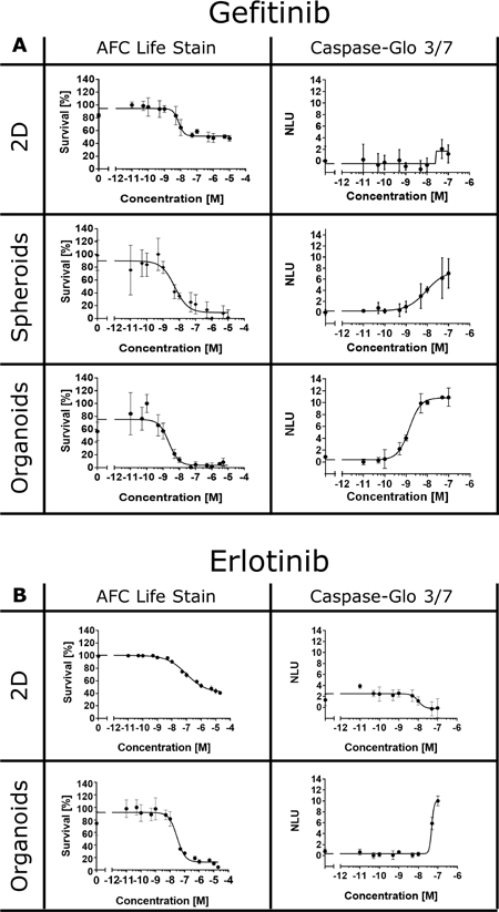 EGFR inhibitors induce cell death in 3D cultures.
