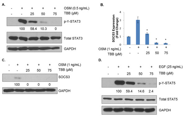 CK2 Is Necessary for Full Activation of Cytokine- and Growth Factor-Induced STATs.