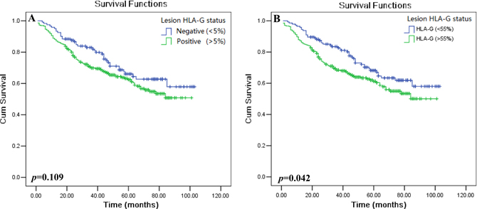 Kaplan–Meier survival analysis of HLA-G expression in CRC patients.