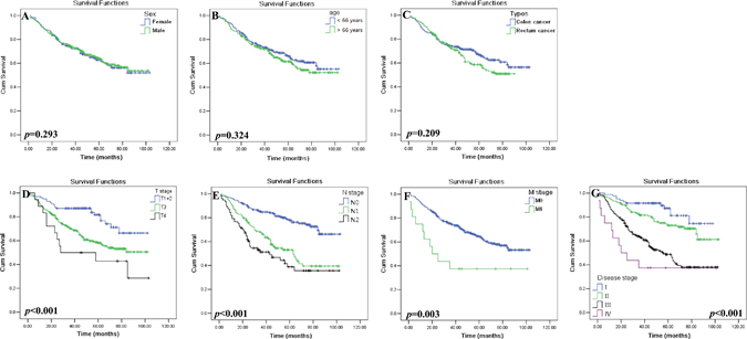 Kaplan–Meier survival analysis of clinical parameters in CRC patients.