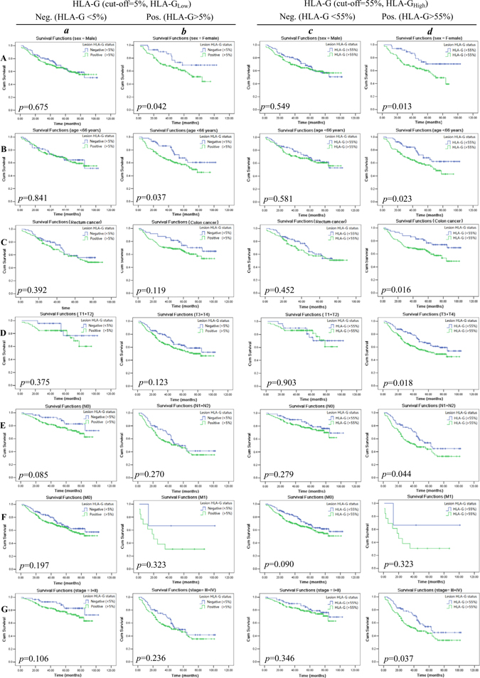 Kaplan–Meier survival analysis of stratified clinical parameters in survival by lesion HLA-G expression (HLA-GLow; A~G-a and -b) and (HLA-GHigh; A~G-c and -d) in CRC patients, respectively.