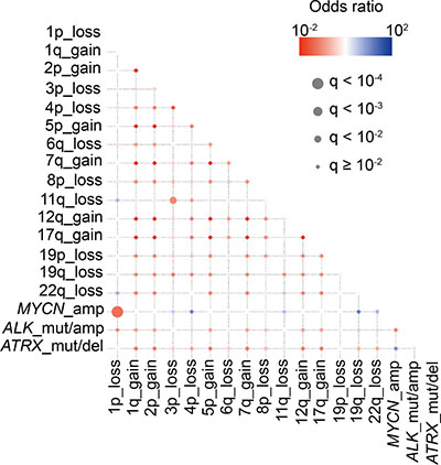 Correlations and temporal hierarchy of gene alterations in 75 neuroblastoma with relapse.