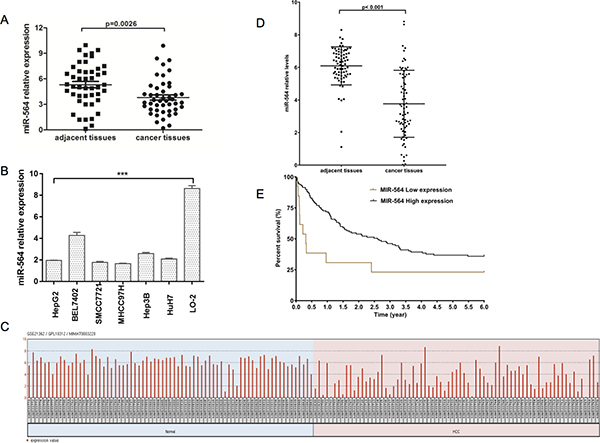 miR-564 expression is downregulated in HCC.
