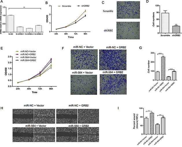 Silencing GRB2 inhibits HCC cell proliferation and invasion.