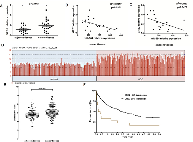 GRB2 is upregulated in HCC and is inversely correlated with miR-564 expression.