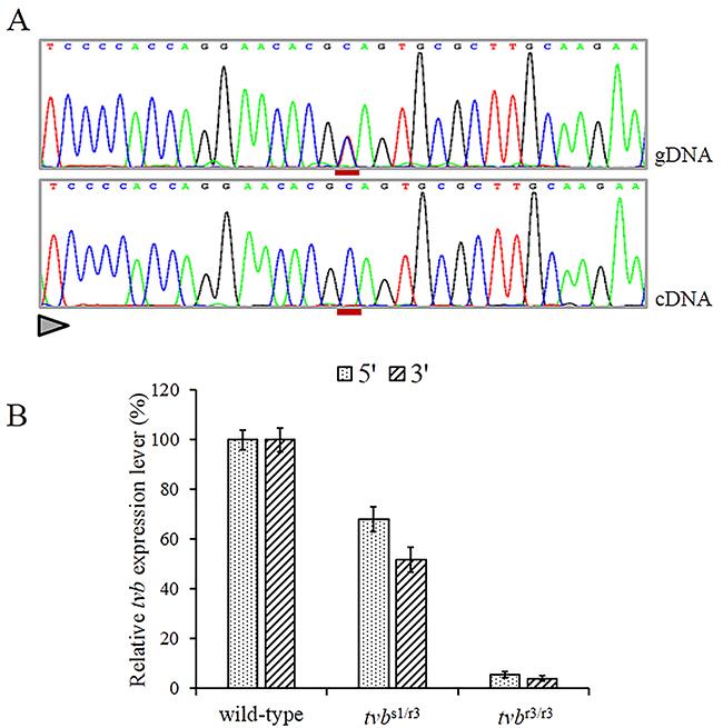 Nonsense-mediated RNA decay of c.