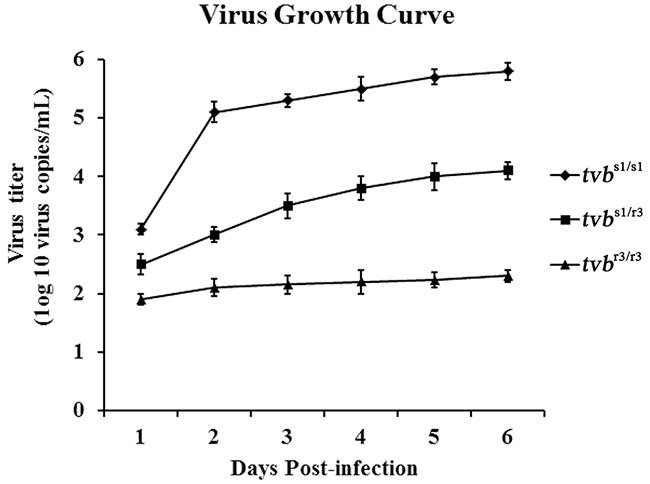 Growth curve of ALV-B wild virus in CEFs of defined origin.