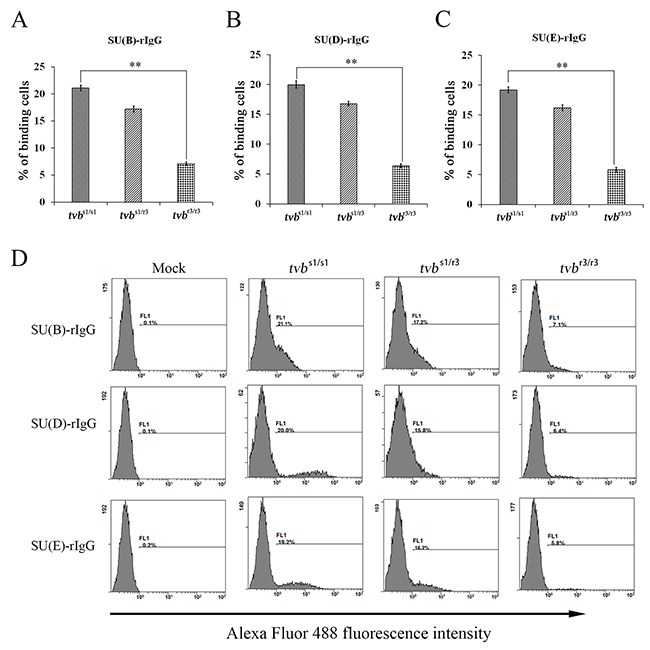 Binding affinities of ALV envelope glycoproteins for Tvb receptors expressed on the surfaces of CEFs of defined origin.