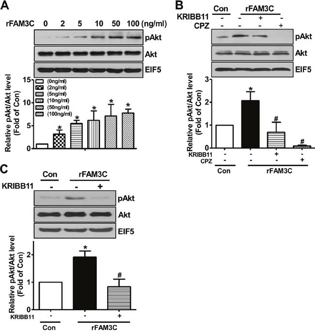 rFAM3C induced Akt phosphorylation in hepatocytes.