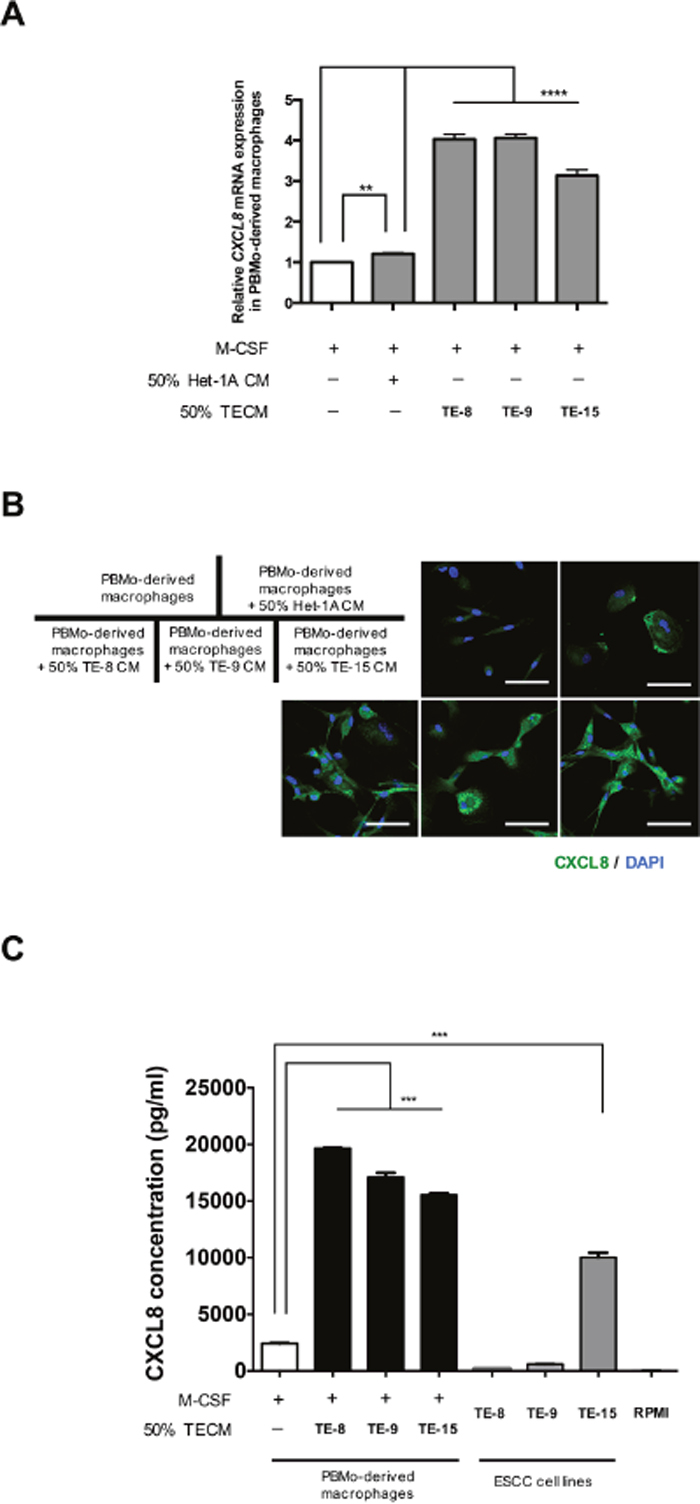 Induction of CXCL8 in PBMo-derived macrophages stimulated with TECM.