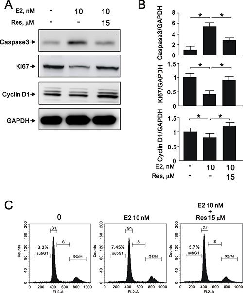 Resveratrol reversed E2-induced effects on proliferation, apoptosis, and cell cycle progression in A7r5 cells through SIRT1 activation.