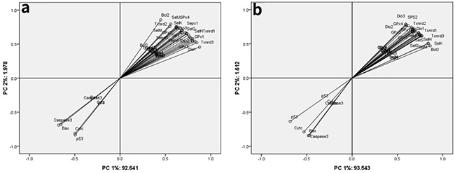Principle component analysis among twenty-five selenoproteins and five apoptosis-related genes in the chicken brain tissues and embryonic neurocytes.