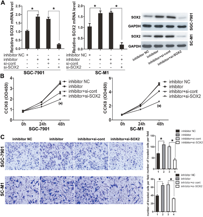 Knockdown of SOX2 antagonized the pro-invasion and pro-proliferation functions of miR-638 inhibitor.