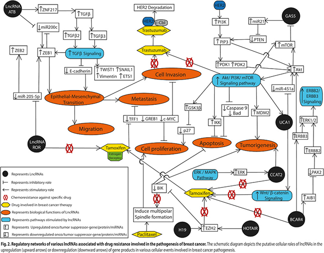 Regulatory networks of various lncRNAs associated with drug resistance involved in the pathogenesis of breast cancer.