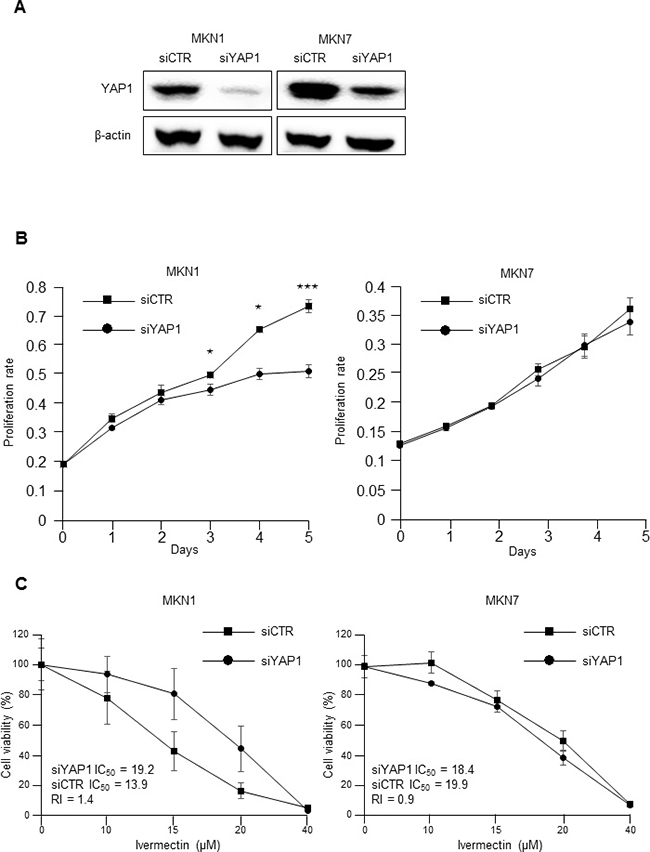 The antiproliferative effects of ivermectin were dependent on YAP1 expression.