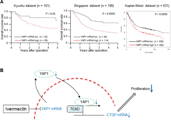 Low expression of YAP1 mRNA in tumor tissues predicted good prognosis in GC.