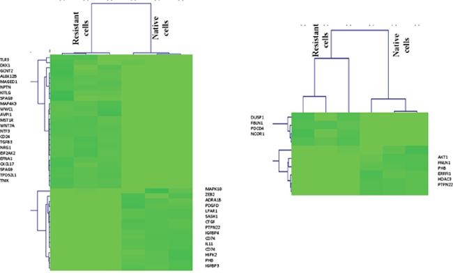 Positive and negative regulation genes of ERK pathway in TNBC cells.