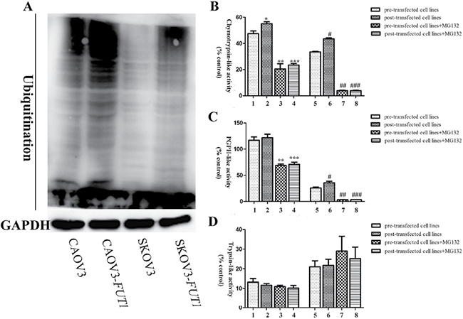 The relationship between the expression of Lewis y antigen and ubiquitin-proteasome system function in the pre- and post-transfected cell lines.