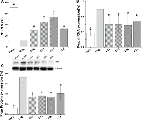 Saikosaponin A, C, and D inhibited Pgp activity and expression in HEK293-Pgp cells after 24 h co-culture.