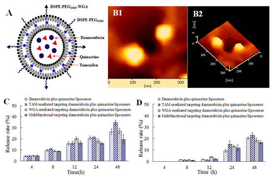Fig.1: Characterization of multifunctional targeting daunorubicin plus quinacrine liposomes.