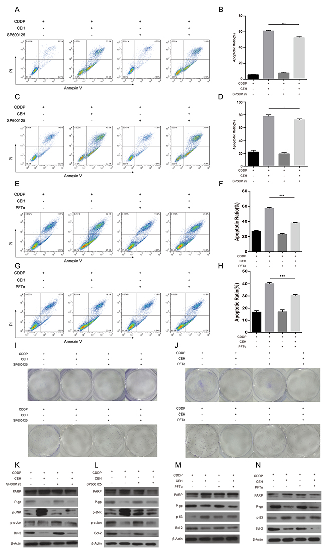 JNK inhibitor SP600125 and p53 inhibitor PFTα can partially reverse the apoptosis and cycle arrest induced by combined cisplatin (cDDP) and cepharanthine hydrochloride (CEH) treatment in Eca109 and Eca109/CDDP cells.