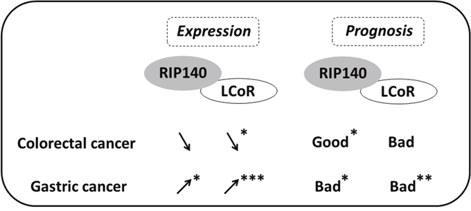 Scheme comparing the expression and prognosis value of RIP140 and LCoR in CRC and GC.