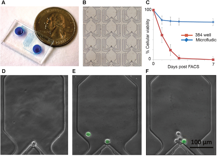 Single cell microfluidics chips allow efficient capture and monitoring of ovarian cancer stem cells.