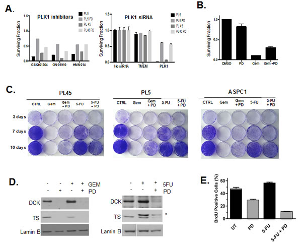 Drug specific effect of CDK4/6 inhibition on chemotherapy.
