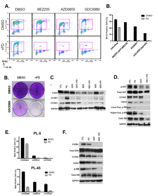 PI3K/MTOR and MEK inhibitors synergize with CDK4/6 inhibition.
