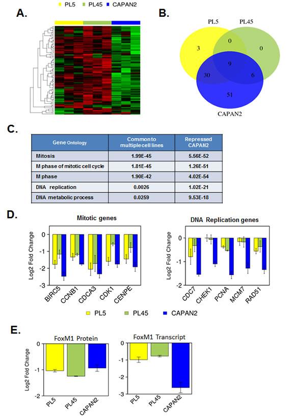 Gene expression profiling of RB/E2F target genes reveals differential transcriptional repression.