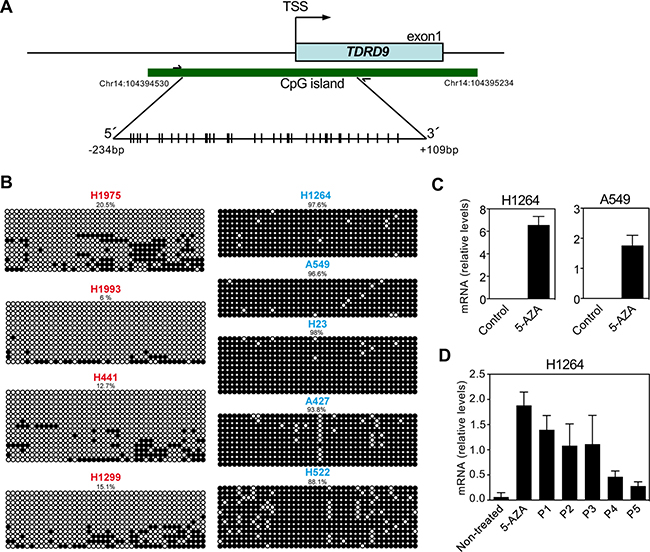 DNA methylation profile of the CpG island of TDRD9 promoter.