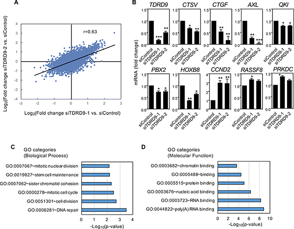 Characterization of transcriptional changes caused by TDRD9 knockdown in the lung adenocarcinoma cell line H1993.