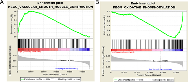 Gene set enrichment analysis revealed KEGG pathways associated with risk score.
