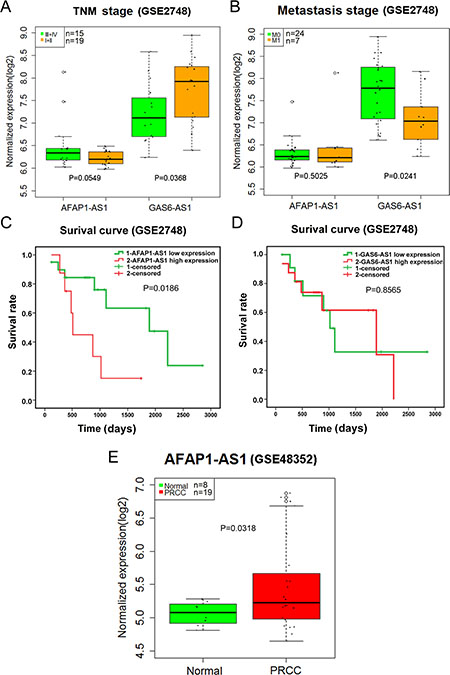 Validation of AFAP1-AS1 and GAS6-AS1 in papillary renal cell carcinoma (PRCC) based on Gene Expression Omnibus (GEO).